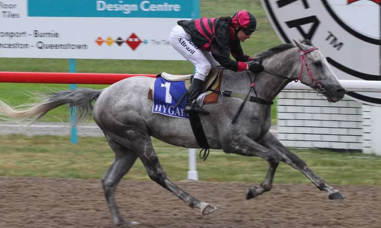 JAKCORIJIM Kendel Star gelding wins the Golden Mile