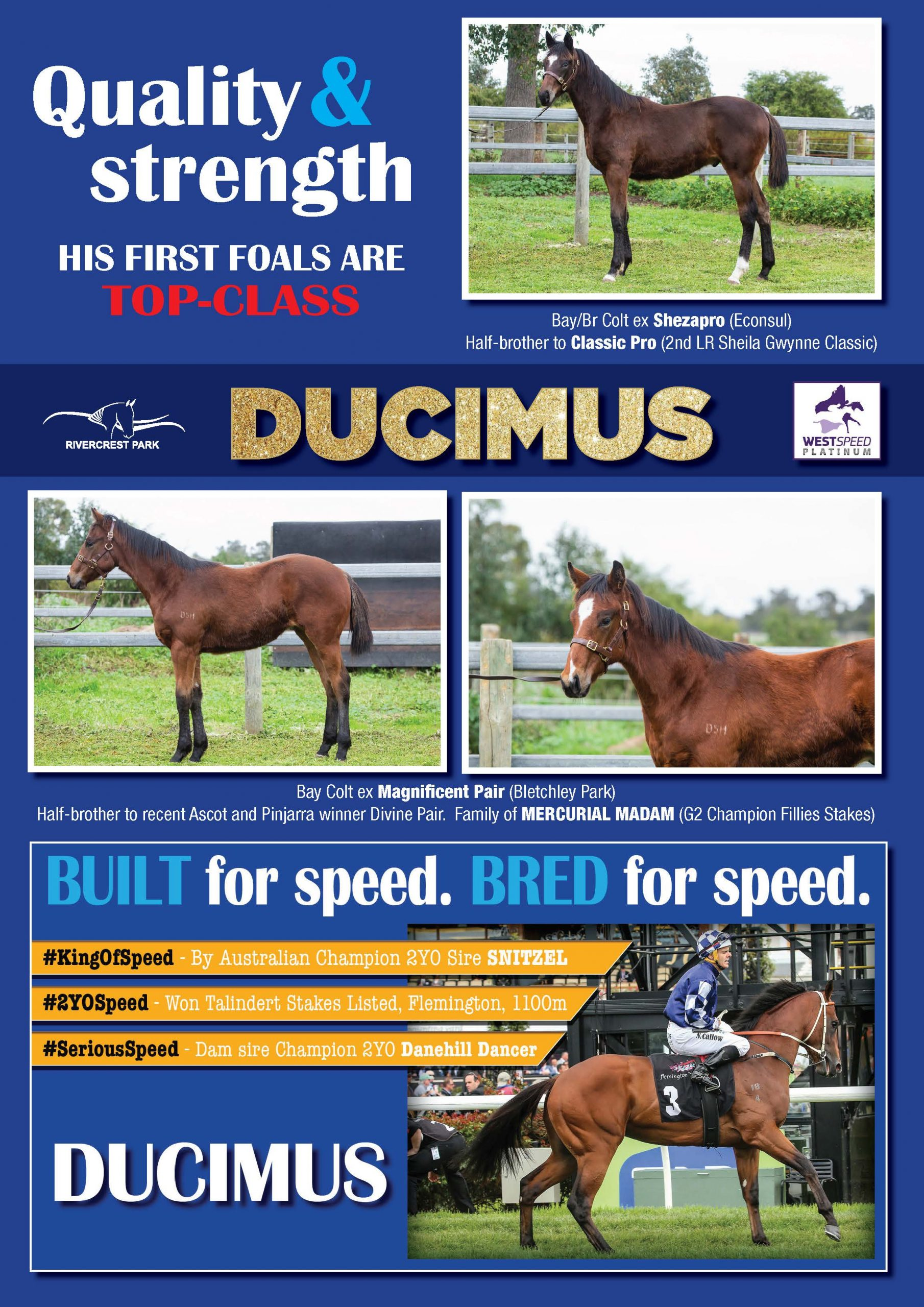 Ducimus brochure page 2